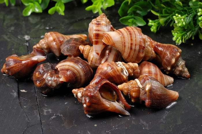 贝类主要分为五大纲,全世界有7万多种,海生的种类可通称为海螺.